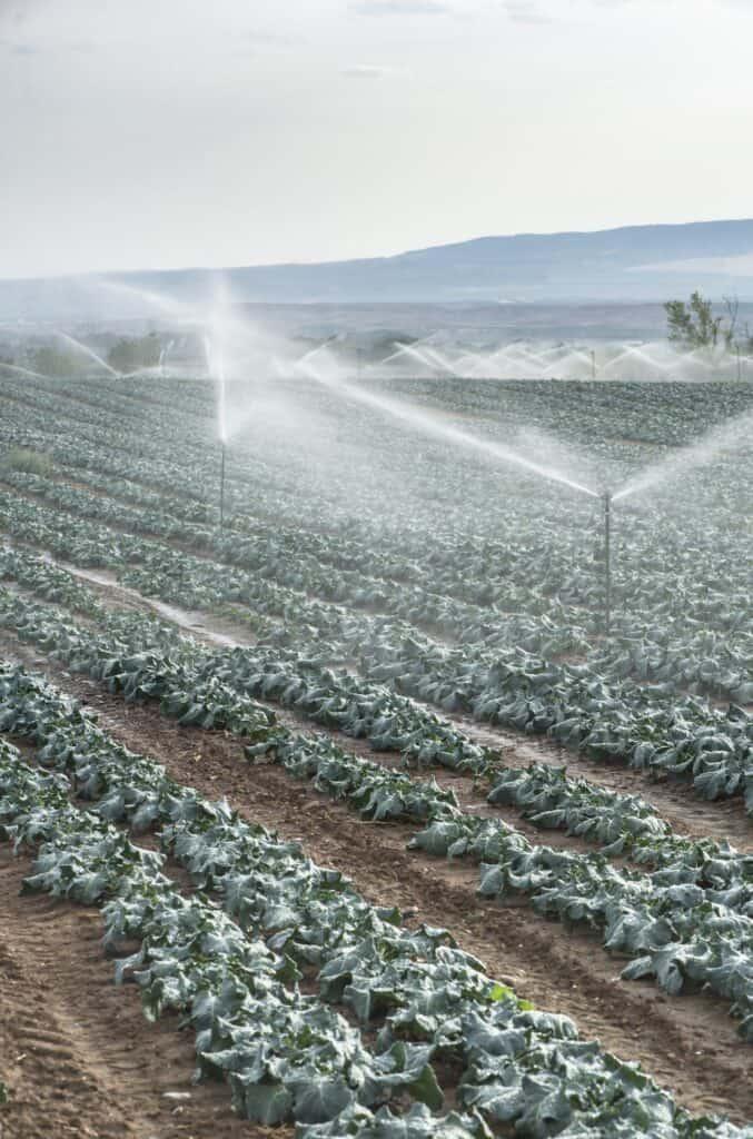 Arrosage automatique agricole
