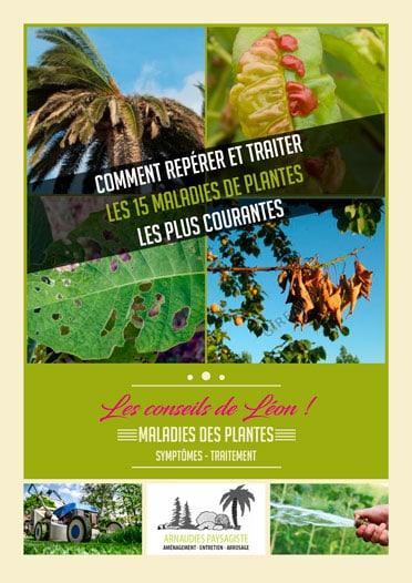 Guide maladies des plantes - Les conseils de léon
